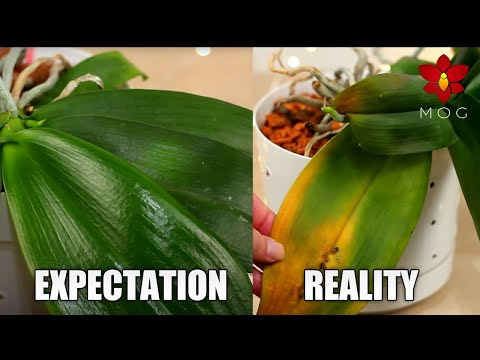 Orchid Growing Expectations which are Unrealistic & Toxic - Let's be real 🤨