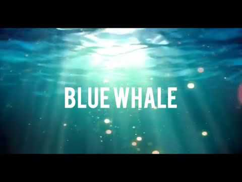 Blue whale Song... 💖💖💖 - YouTube