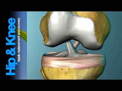The Anterior Cruciate Ligament: What is it & what does it do?