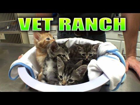 5 Tiny Homeless Kittens