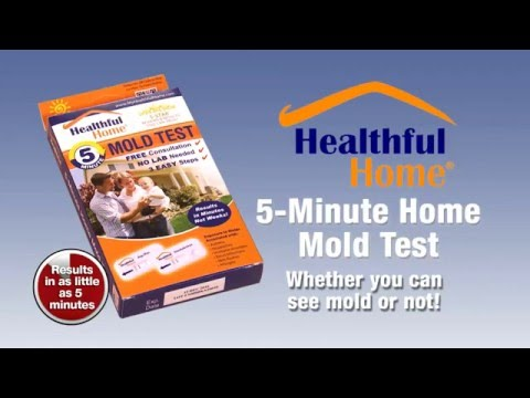 The 5 Minute Mold Test
