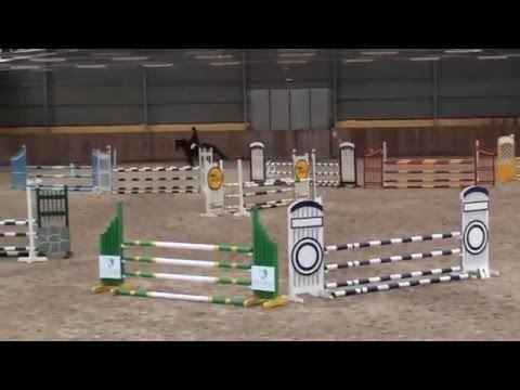 12 y.o. stallion Top Pony group D
