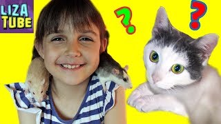 Крыски в лабиринте #7 и Коржик 🐀🐭🐱 Лиза и питомцы 🌸 LizaTube