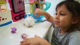Rüya'nın Tavşanı Cute Baby Rabbits - Funny Bunny Baby Videos