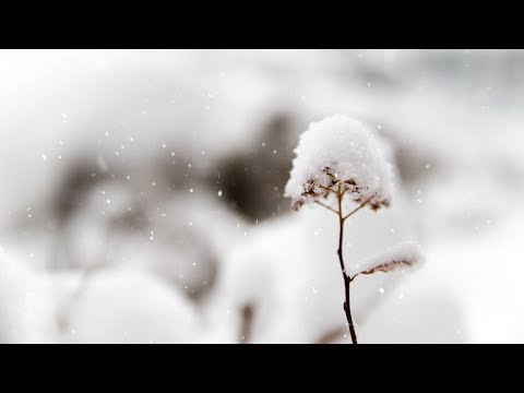 Peaceful Christmas Instrumental Music, Piano Christmas Music, 'Christmas Peace' by Nature With Music by Tim Janis