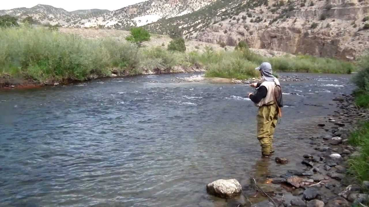 fly fishing arkansas river no strike indicator ak fly