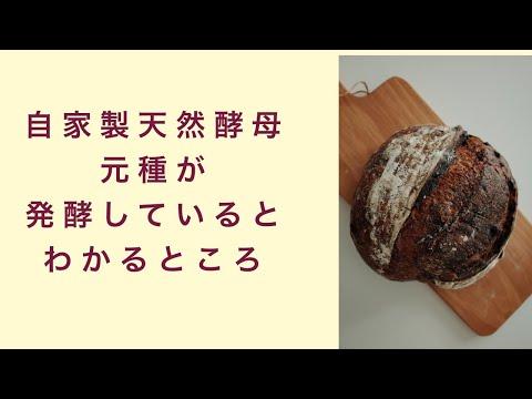 【自家製天然酵母】元種が発酵しているかどうかを確認する方法 フルーツ酵母 自家製天然酵母 パン教室 教室開業 大阪 奈良 東京 福岡 名古屋