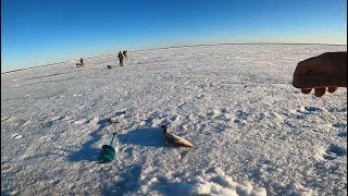 Рыбалка Налим по последнему льду