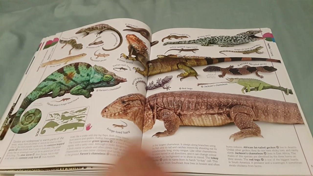 Animal Encyclopedia Book