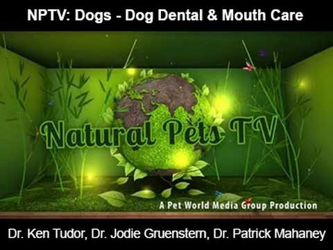 Natural Pets TV: Dog Edition - Episode 2 - Dog Dental & Mouth Care - Issues, Concerns and Care