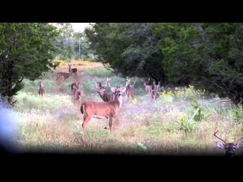 Bang Whitetail Ranch - Estrada Hunt - Texas Deer Hunt