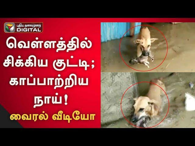 வெள்ளத்தில் சிக்கிய குட்டி ; காப்பாற்றிய நாய் வைரல் வீடியோ   Karnataka   Dog   Viral video