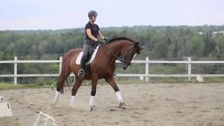 À VENDRE - Rio's Klassic Mark, Oldenbourg X Thoroughbred, 9 ans, Niveau 3 (Third Level)