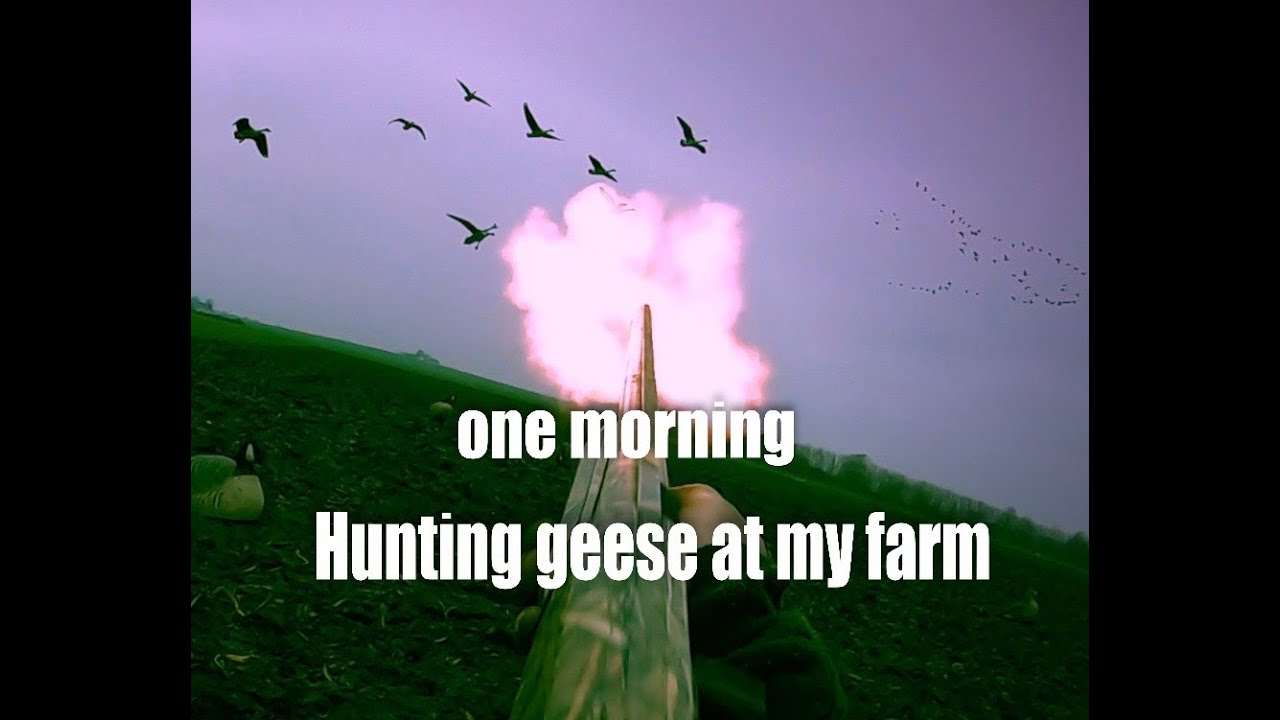 Hunting Geese at My farm