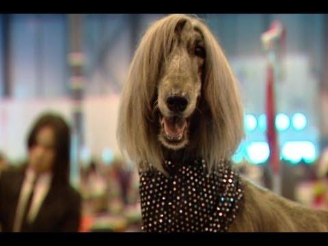 La 85 Exposición Internacional Canina en Madrid