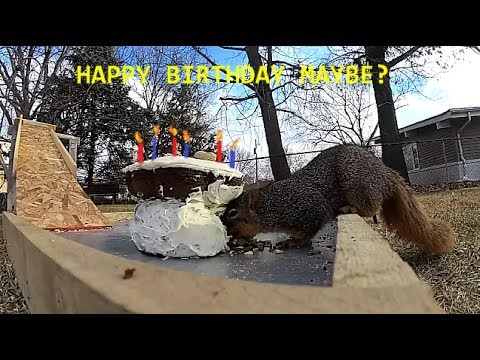 Yummy Cake for the Squirrels