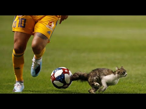 UNEXPECTED Animals Interrupting Football II Dogs, Kangaroo, Squirrel, Monkey, Cow ll COMPILATION