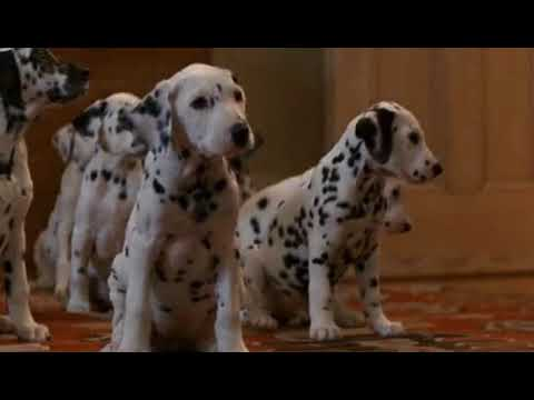 101 Dalmatians Collar Scene Youtube