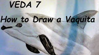 VEDA 7: How to Draw a Vaquita