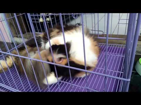 Ciri - Ciri Kucing Berhasil Kawin