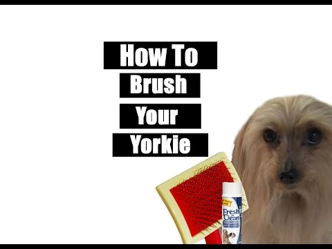 How To Brush Your Yorkie