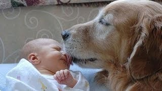 【犬と赤ちゃん】 隣にぴったり寄り添う姿に癒される! thumbnail