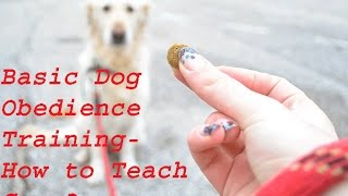 Basic Dog Obedience Training - How To Teach Come??