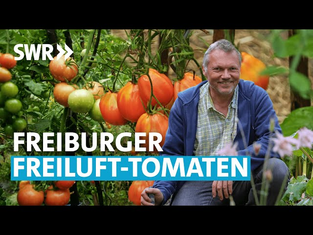 Der Tomaten-Spezialist (2/6) | Mein leckerer Garten