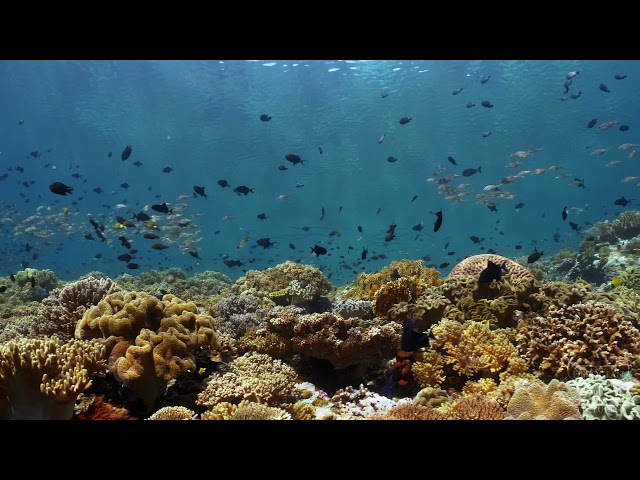 Take a Minute XXXI: Coral reef life or breathing to relax body and mind