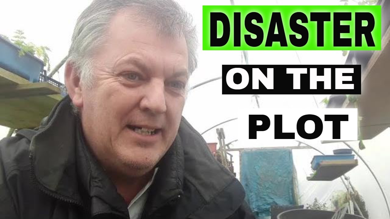 ★ DISASTER on the Allotment Plot / Allotment Gardening UK