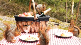 Picnic with Squirrels & Relaxing Birdsong (4K)