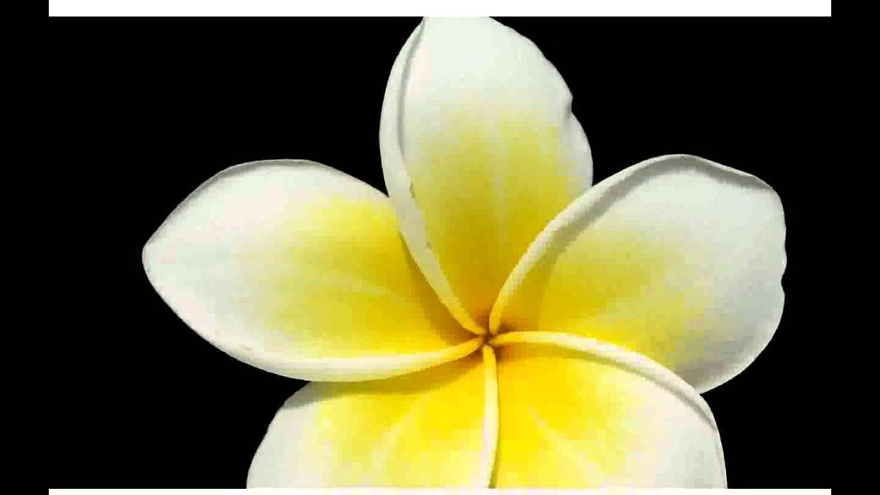 White Yellow Flowers - pictures - YouTube