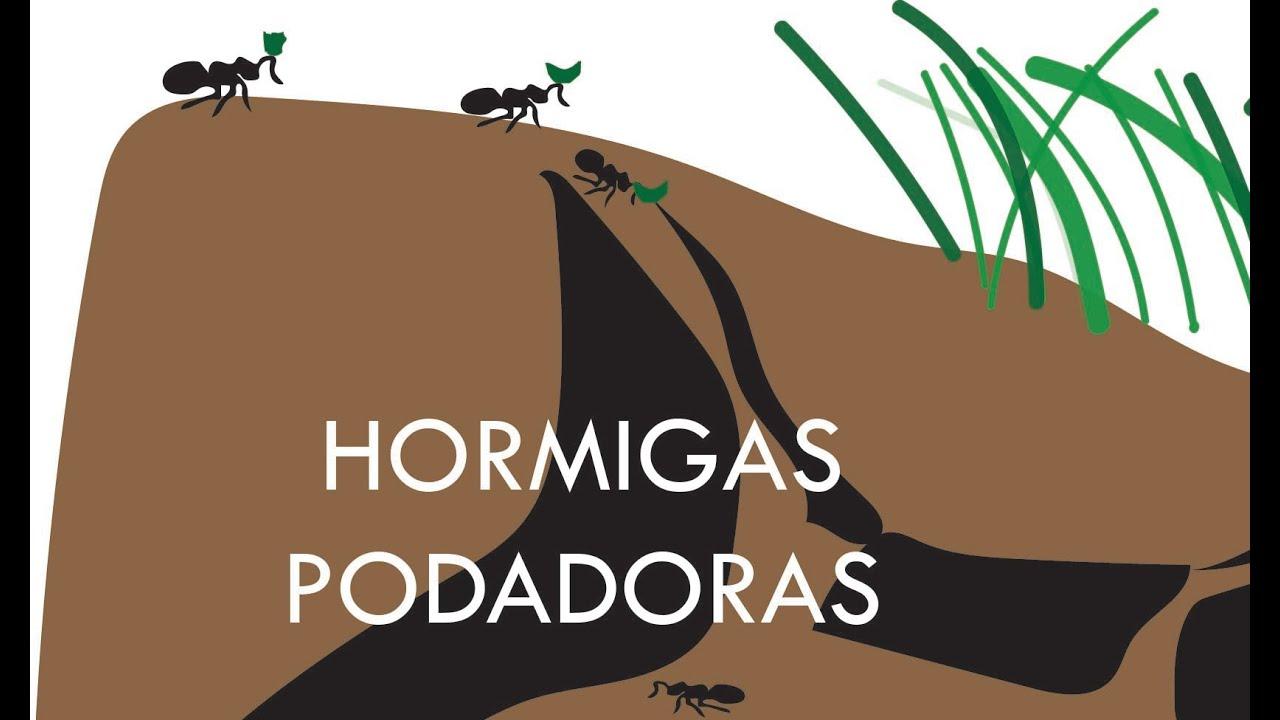 Download Cómo combatir/matar/eliminar hormigas podadoras: en forma Orgánica o Química.