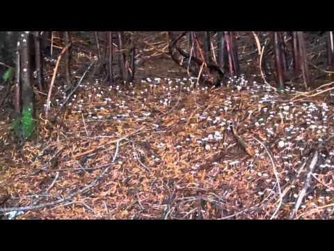Ever Seen A Carpet Of Mushrooms?
