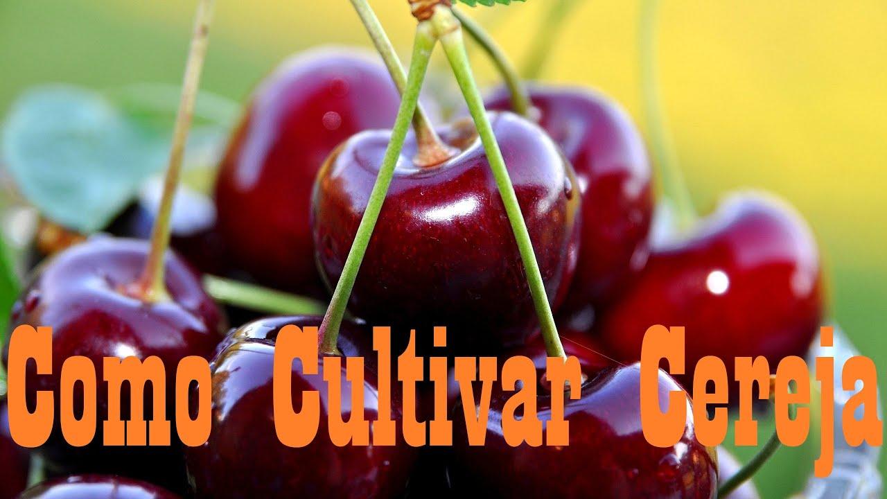 Download Mondini Plantas: Como Cultivar Cereja