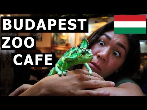 BUDAPEST! (Heroes' Square + Central Market Hall + Zoo Cafe)