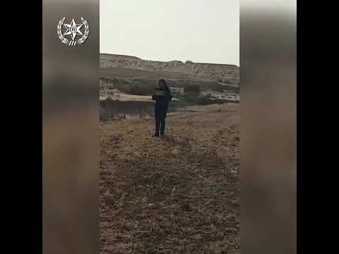 חמורים עם צלבי קרס / צילום: משטרת ישראל / ברנז'ה חדשות