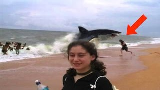 UNBELIEVABLE MOST EXTREME Animal Attacks Compilation 2016 HD