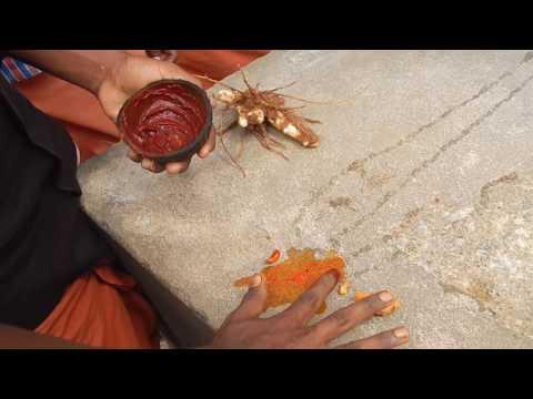 Nilgiris paniyas tribal art
