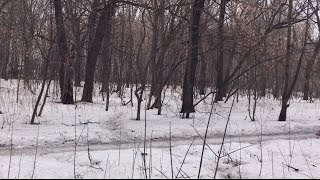 В лесу поджидает опасность