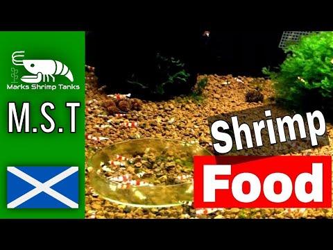 Crystal Red Shrimp How Much Food 🦐 Marks Shrimp Tanks
