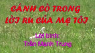 XÓT XA và NGHẸN NGÀO trong câu hát THƯƠNG MẸ!!! - Trần Mạnh Trung