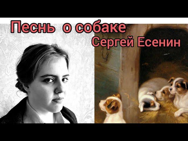 Изображение предпросмотра прочтения – ТатьянаДемченко читает произведение «Песнь о собаке» С.А.Есенина