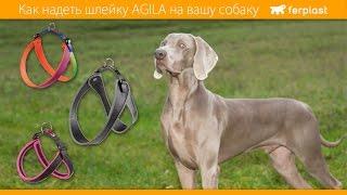 Ferplast - Как надеть шлейку Agila на вашу собаку - RU