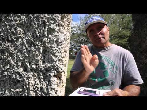 Tonga Tongatapu Guide de Ha'amonga'a Maui / Tonga Tongatapu Guide in Ha'amonga'a Maui