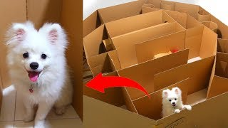 Download Hexagon Maze And Ball For Snowball Dog Hugo Hamster And Corn Kitten Playing Mp3 and Videos