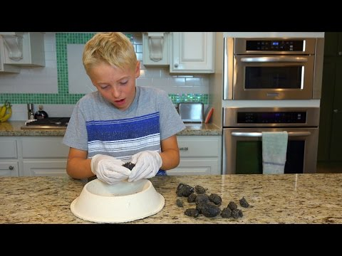Download Youtube: What's inside of Owl Pellets?