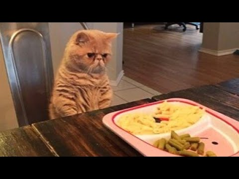 Belive me, YOU DON'T WANT TO MISS THIS! - Extremely FUNNY CATS