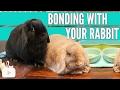 BONDING WITH YOUR RABBIT