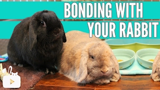 HOW TO BOND WITH YOUR RABBIT 🐰